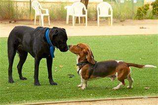 South Bend opens first dog park in the city  – 95.3 MNC News