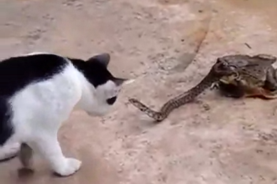 Watch: This Snake Is Having A REALLY Bad Day