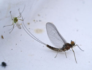 Purdue's vast insect collection gets $3.6M in grants  – 95.3 MNC News