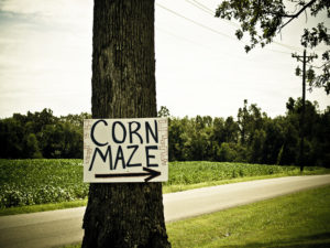 New life for lawsuit against Michigan corn maze owner  – 95.3 MNC News