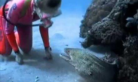 Diver Befriends Eel – Viral Viral Videos