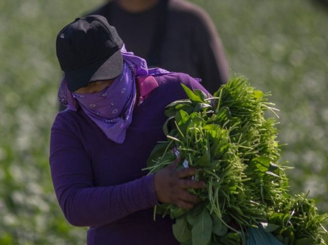 Fake News: NBC Misleads Viewers On 'Crop Rot' Being Caused By Trump Immigration Policy